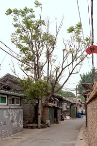 China-0569